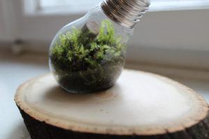 eine ausgehölte Glühbirne mit Treibholz, Moos, Erde, Korken auf einer Baumscheibe